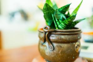 על שתי אהבות (והתמכרויות) בעיצוב הבית: וינטאג' וצמחים
