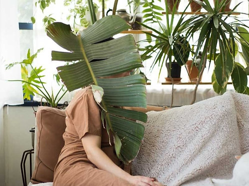 שובר מתנה לקורס האונליין לגידול צמחים + ייעוץ אישי