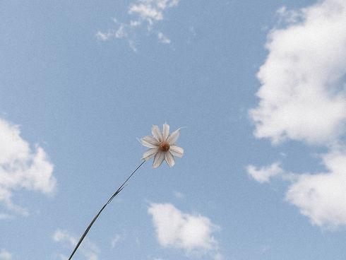 Flowers_Clouds-5.jpg