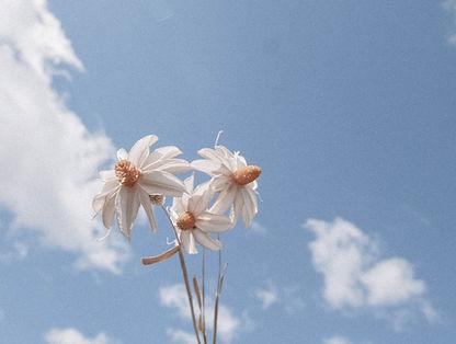Flowers_Clouds-3.jpg