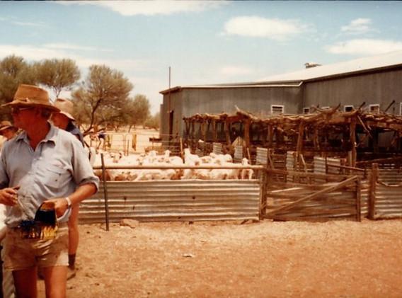 24 David Campbell tonte des moutons Moun