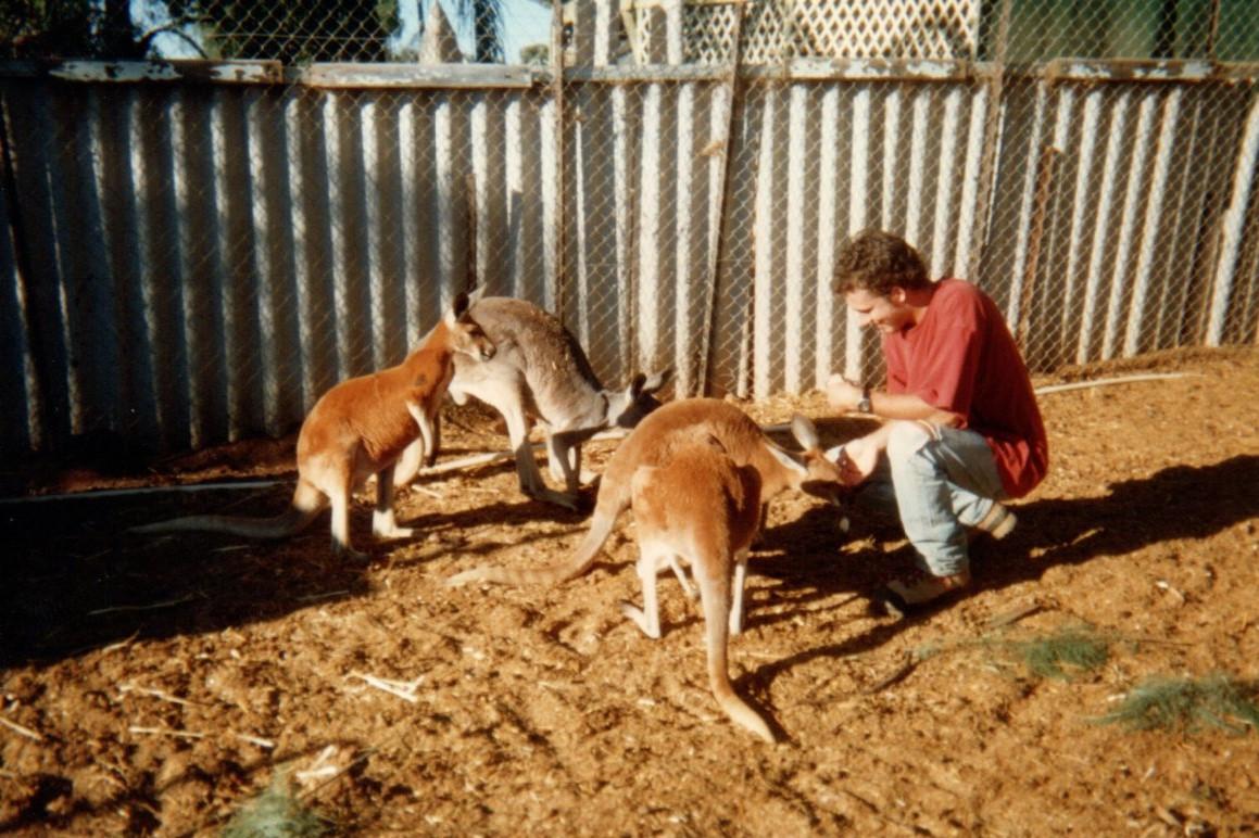 11 refuge des kangourous Mount Magnet