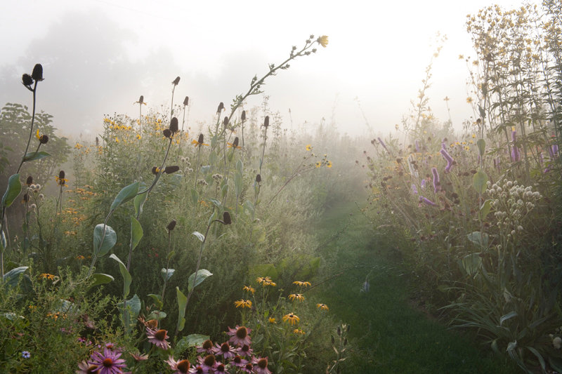 Prairie Meadow, Tom Stuart-Smith - Limited Edition Fine Art Giclée Print
