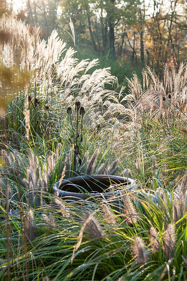 Autumn grasses at Federal Twist - Limited Edition Fine Art Giclée Print