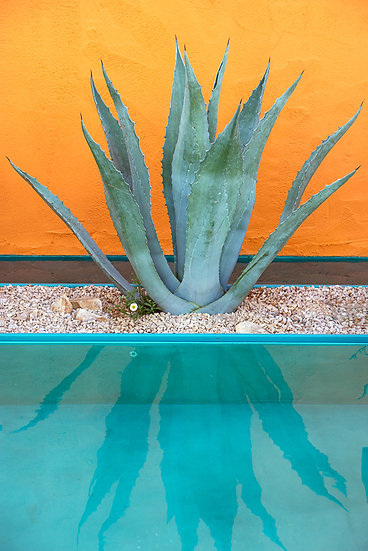 Agave in Beneath a Mexican Sky garden - Limited Edition Fine Art Giclée Print