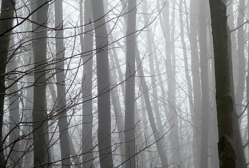 Bedgebury Forest - Limited Edition Fine Art Giclée Print