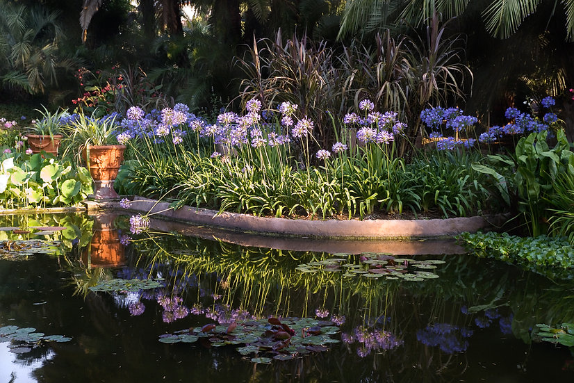 The Water Garden at Lotusland - Limited Edition Fine Art Giclée Print