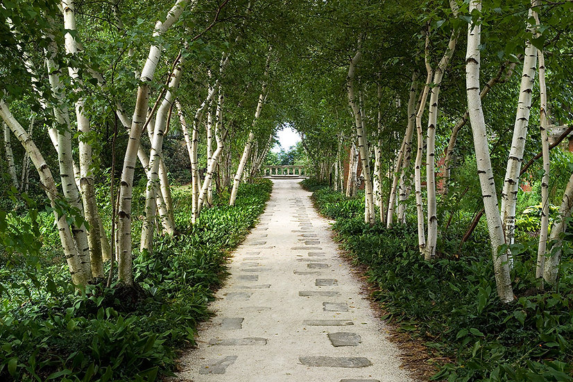 Birch Allee at Stan Hywet Gardens - Limited Edition Fine Art Giclée Print