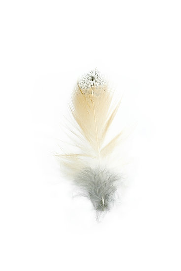 Barn Owl feather - Limited Edition Fine Art Giclée Print
