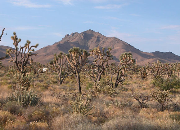 5 Acres - 30 mins from Dolan Springs, AZ - 351-22-043
