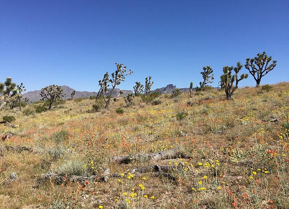 30 Acres - Near Dolan Springs, AZ - 319-07-014A
