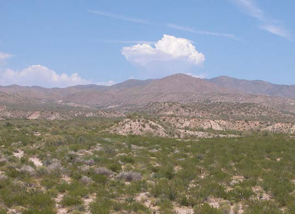 5.00 Acres – Near Kingman, AZ - 201-31-062