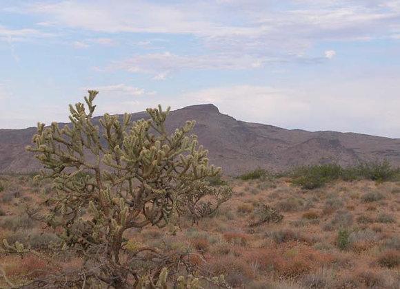 1.00 Acres – Near Dolan Springs, AZ - 316-03-077