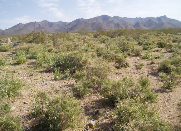 5 Acres Flat, Buildable - 30 mins from Dolan Springs - 351-14-065