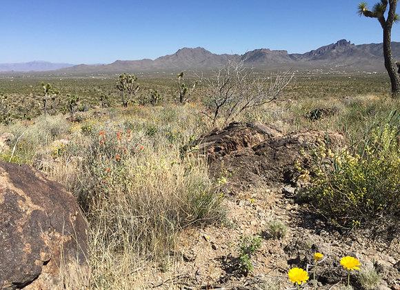 1.00 Acres – Near Meadview, AZ - 343-07-133