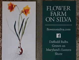 Flower Farm on Silva business cards are ready!  We'll have them this Saturday!