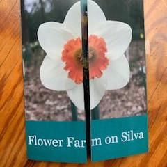 Flower Farm on Silva's Newest Flier About Our Daffodil Farm!