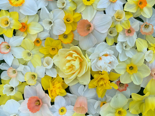 OUR SITE IS UNDER CONSTRUCTION TODAY -We are adding our  daffodils that go on saleTOMORROW 4 20 21!