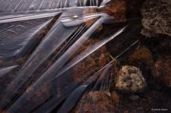 Ice in Toulumne Meadows
