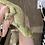 Thumbnail: White Collar Pine Isle Chahoua - Proven Adult Male