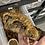 Thumbnail: High Color Bayonaisse - Juvenile Male