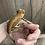 Thumbnail: Red/Orange Stripe Gargoyle - Sub Adult Male