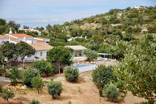 Mediterranean villa in olive groves envi