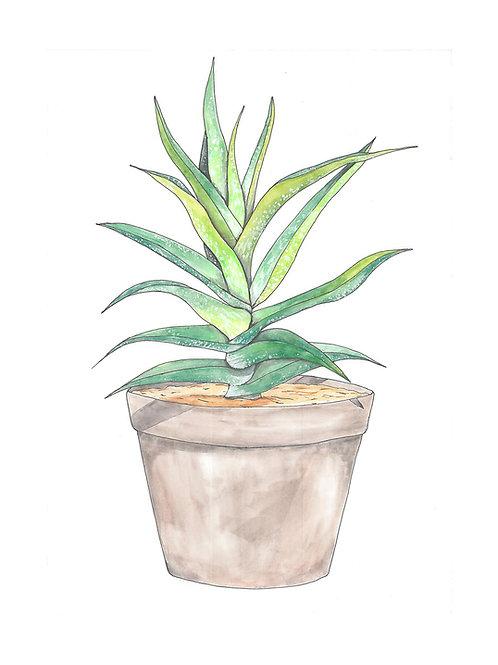 Aloe Vera II 8x10 print