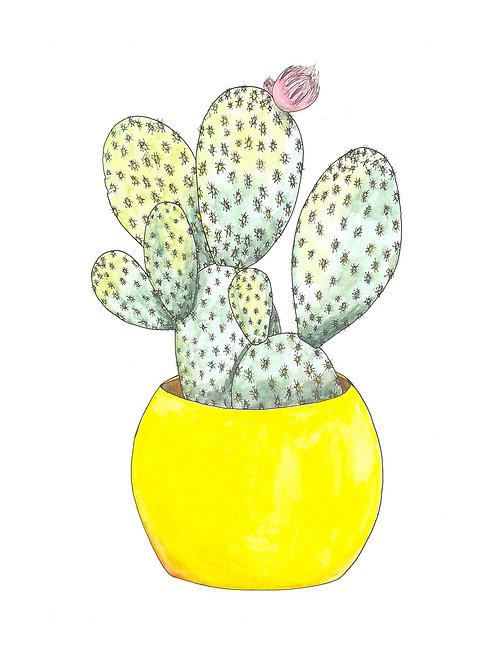 Bunny Ear Cactus 8x10 print