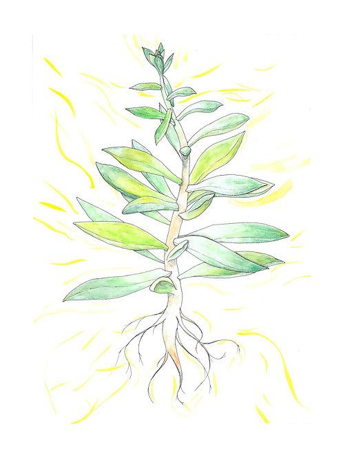 Pachyveria, Spring Bouquet 8x10 print