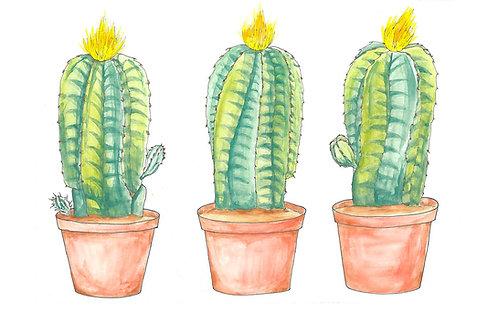 Barrel Cactus Triptych 8x10 print