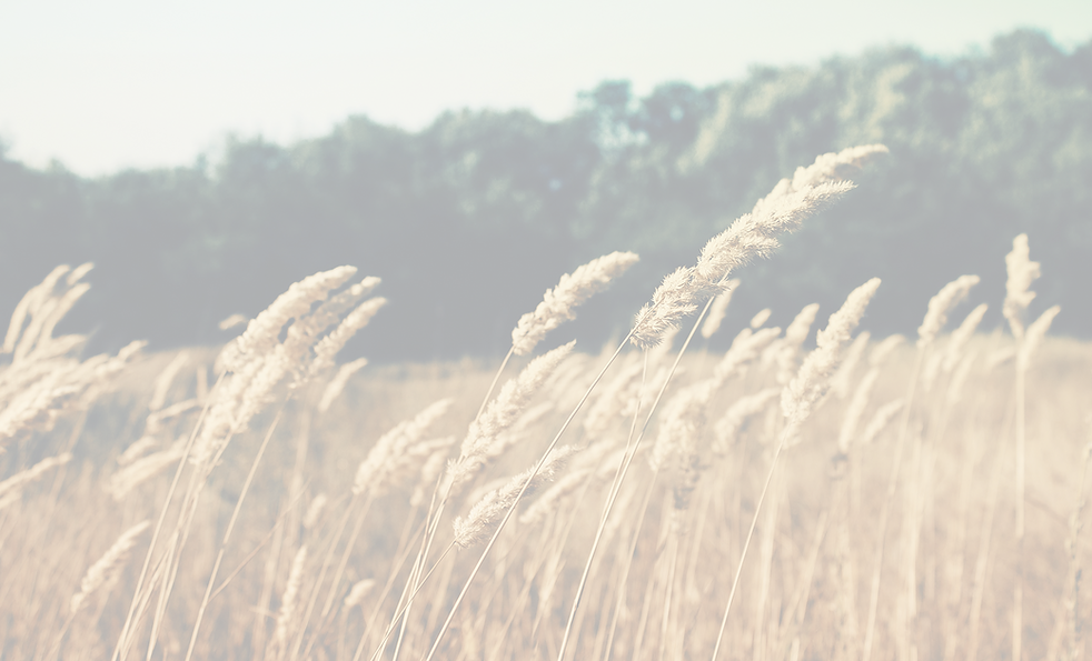 Wheat Field_edited.png