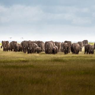 Big elephant nursery
