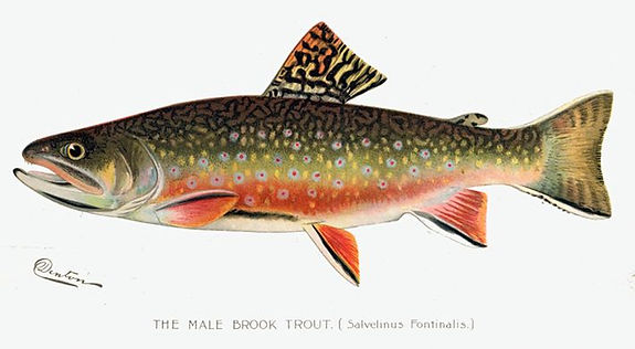 Things to do in Salento Colombia trout