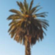 arequipa-palm-tree-sunny.jpg