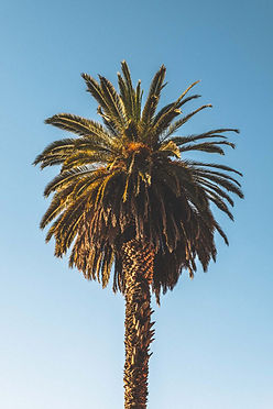 5 great things to do in Arequipa Palm Tree