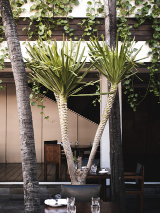 Lunch under a palm