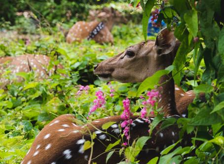 Trincomalee Sri Lanka - 5 Great Things To Do