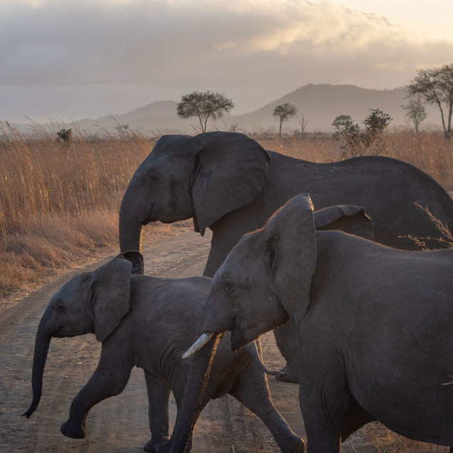 Elephant family out and about