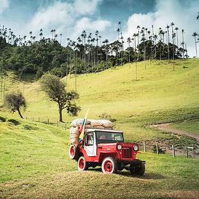 Salento Colombia Cocora Valley Palms.jpg