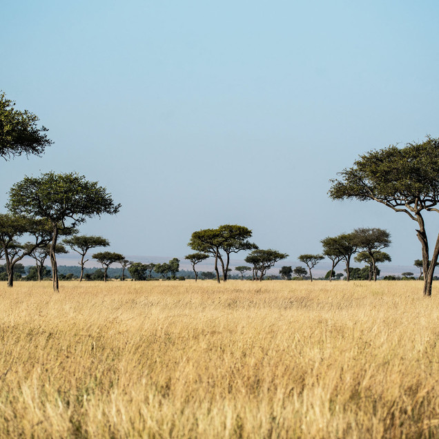 East African savanah