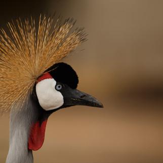 Beautiful exotic bird