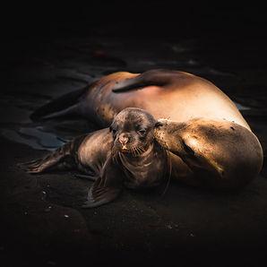 mother-and-baby-seal-galapagos.jpg