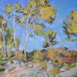 Pines, Serra dels Paranys No 1