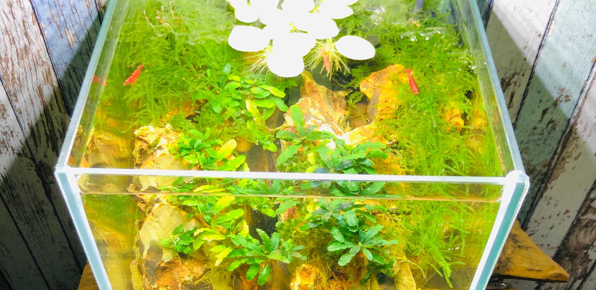 12 Liter NanoScape www.diskusmummy.de (7