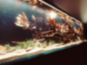 www.diskusmummy.de Cory-Kallax-Aquarium