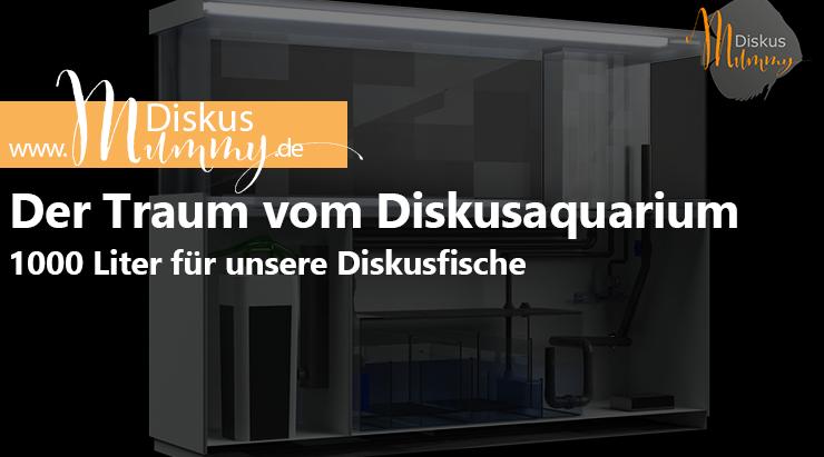 Der Traum vom 1000 Liter Diskus-Aquarium