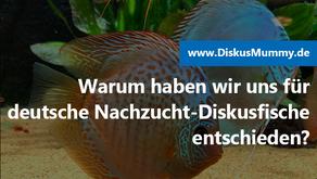Warum haben wir uns für deutsche Nachzucht-Diskusfische entschieden?