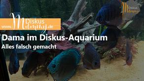 Drama im Diskus-Aquarium - Alles falsch gemacht