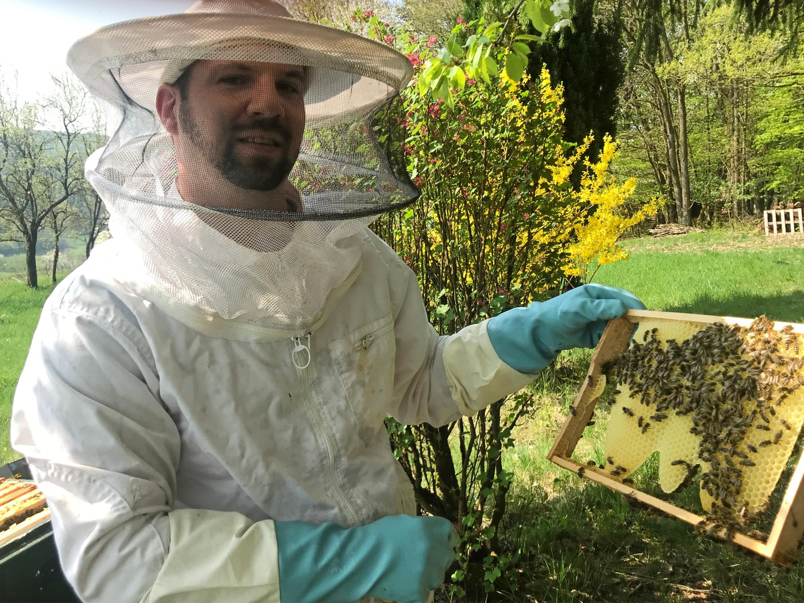 Bienendurchsicht